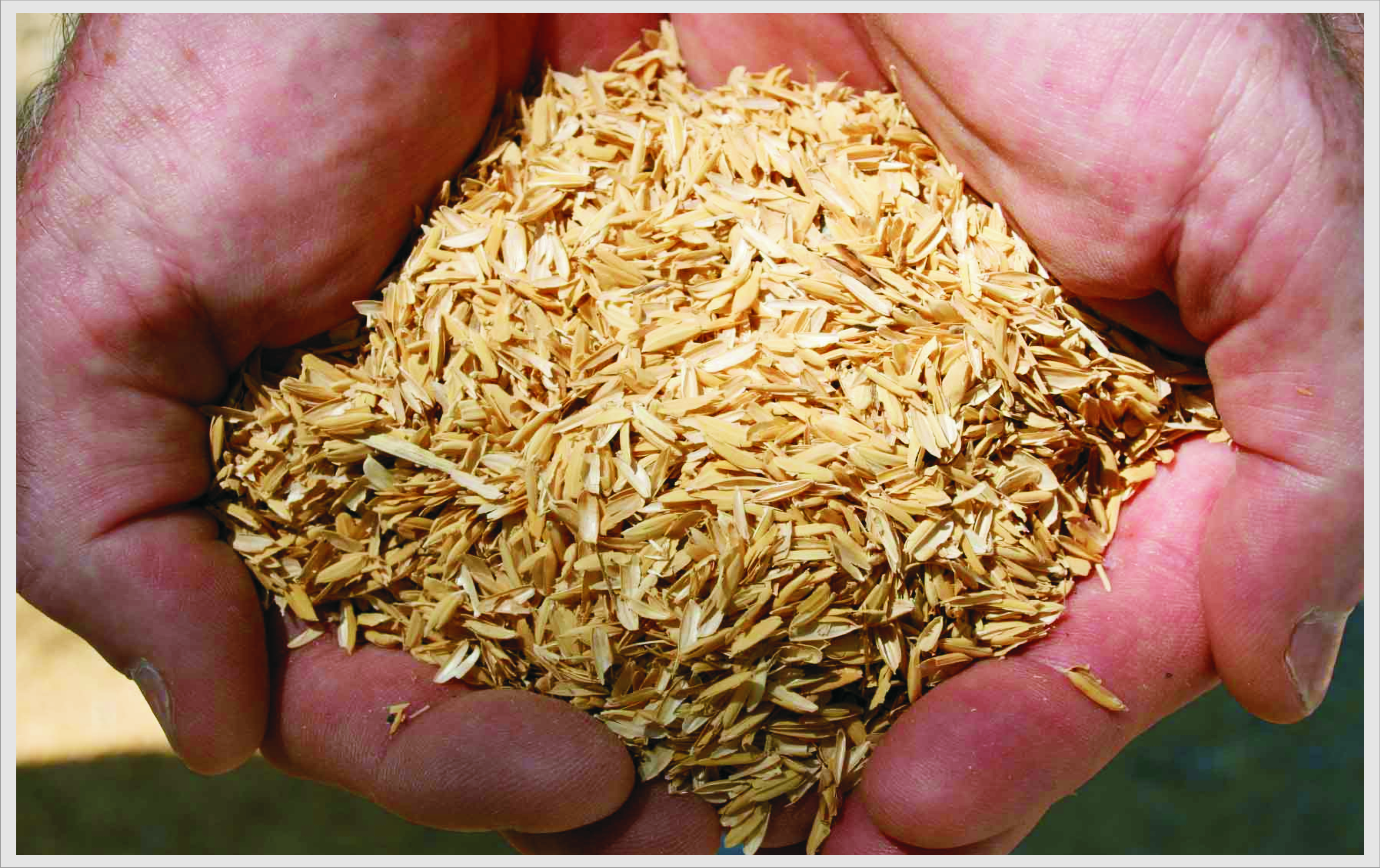 chemical composition of rice pdf